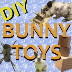 DIY Bunny Rabbit Toys that are Cheap and Easy to Make. Awesome for all sorts of small animals. Bunny approved DIY Rabbit toys! !