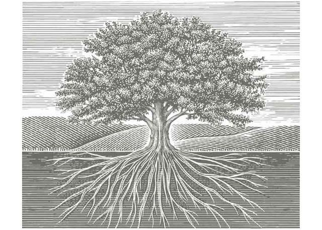 Old Oak Tree Roots. Steve Noble | Reep what you sow ...