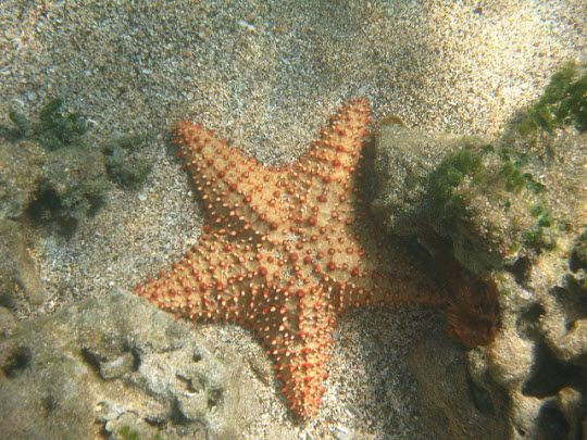 Top 8 Spots to Dive and Snorkel in St. Kitts and Nevis #Caribbean #scuba