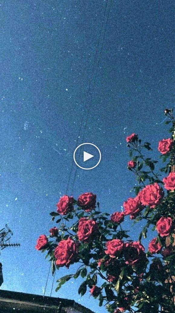 100 Beautiful Iphone Wallpaper Iphone Background Summer Flower