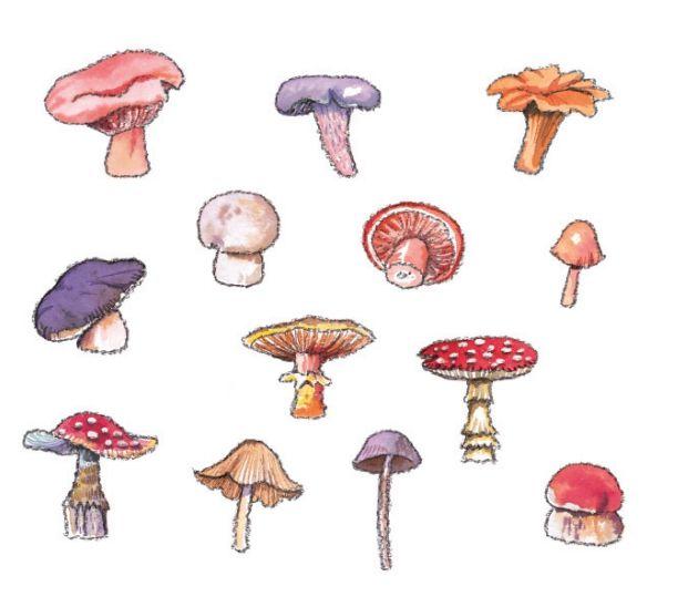 💘💘 Mushrooms Art 💘💘