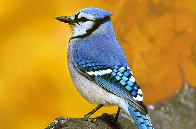 Attracting Nesting Birds With Better Birdhouses