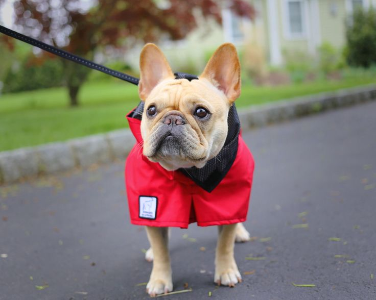Red French Bulldog dog rain coat. High performance, waterproof dog gear. https://k9apparel.com/