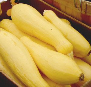 Freezing yellow squash is one of the easiest ways to preserve it for winter