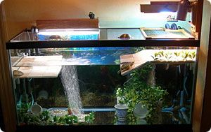 Platform setup for turtle tank