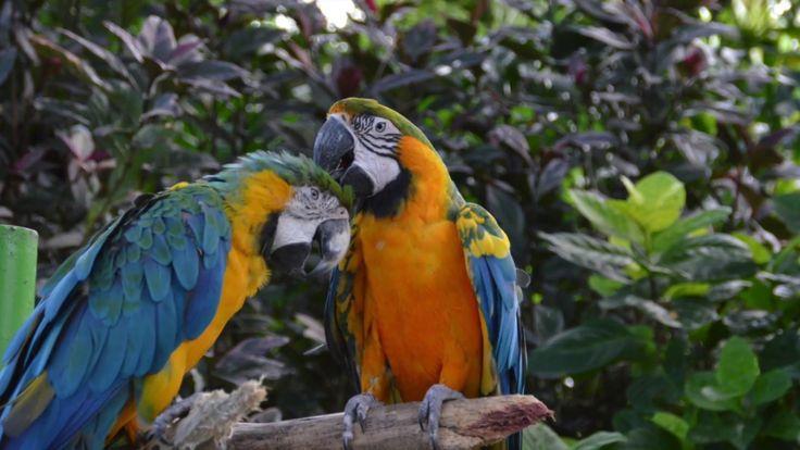 Jardin Botanique De Deshaies Guadeloupe ...Botanical Garden...