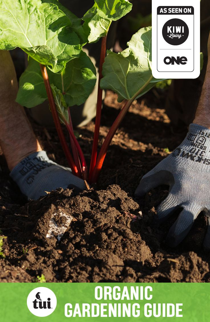 Tui Garden | Organic Gardening Guide #tuigardenprojects