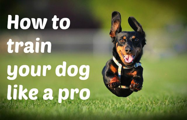 6 tips to train your pooch like a pro from a professional dog trainer