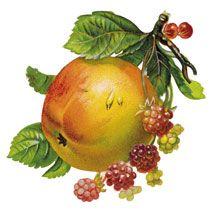 Natural and Herbal Remedies for Depression | VividLife.me