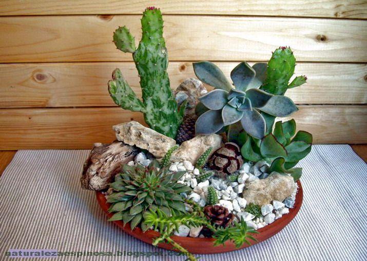Naturaleza espinosa: Arreglo de centros con cactus