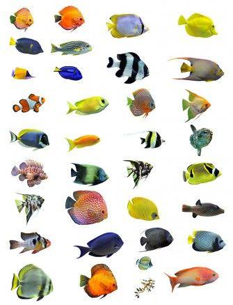 Fotobehang: Tropische Vissen Patroon