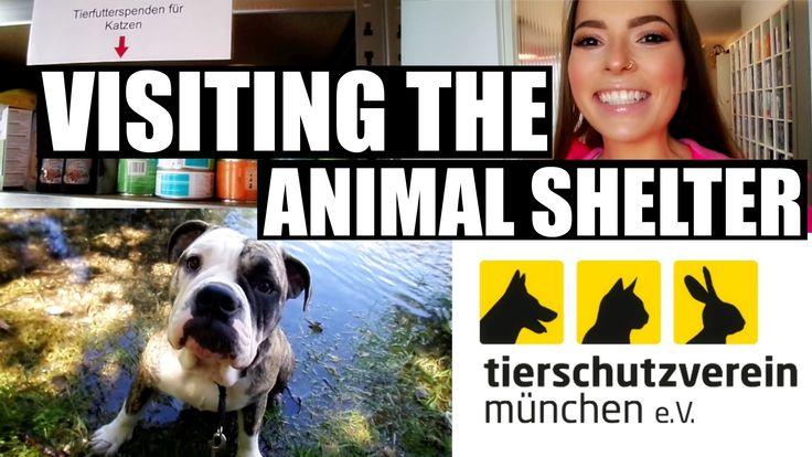 MY VISIT TO THE ANIMAL SHELTER IN MUNICH – THE TIERHEIM MÜNCHEN – ENGLISH VIDEO In today's video I decided to make my first visit to the local animal shelter in Munich: the Tierheim München. #animals #pets #animalshelter #tiere #haustiere #tierheim #tierheimmünchen #gassigehen #münchen #munich #germany #vlog #vlogs #tierliebe #tierlieb #tierschutz #hund #hunde #dog #dogs #bulldogge #bulldog #cats #cat #katzen #katze #donate #donation #spende #spenden #tierschutzvereinmünchen #müchnertierheim