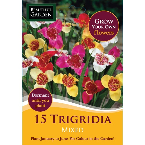 15 Trigridia Mixed Bulbs