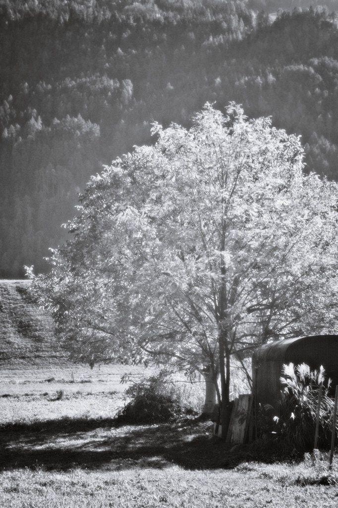 BWSTOCK.PHOTOGRAPHY  //  #tree #garden