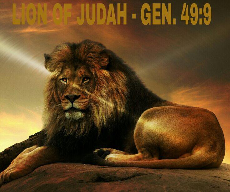 Lion Of Judah Jesus Wallpaper 26331 Loadtve