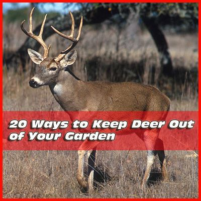 20 ways to keep deer out of your garden mike the for Keep deer out of garden