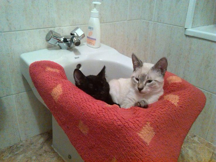 Para los #gatos, cualquier sitio es perfecto para descansar