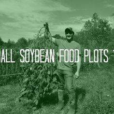 small-soybean-food-plots