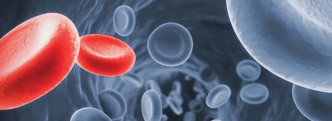 Get Details on Allogeneic Bone Marrow Transplant in India.