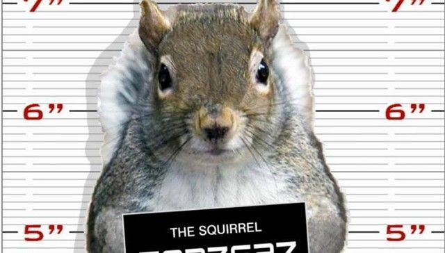 'Stalker' Squirrel Detained By Police