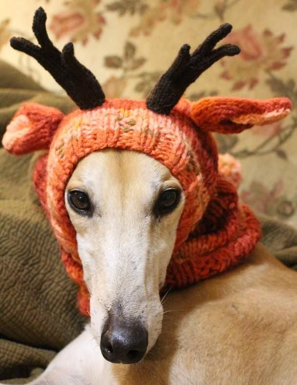 17 Best images about Greyhounds on Pinterest Poses for ...