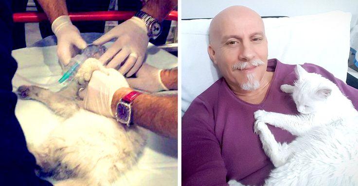 Un gatito callejero entró a un hospital cuando se quedó atorado en la puerta, entonces, un grupo de paramédicos intercedieron por él para salvarlo con RCP