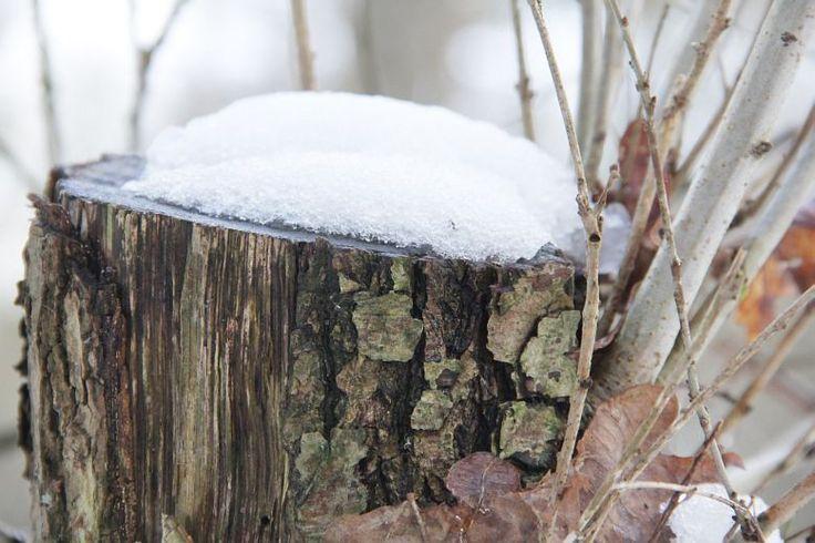 Fraaie taferelen in een winters landschap - Nieuws Ootmarsum