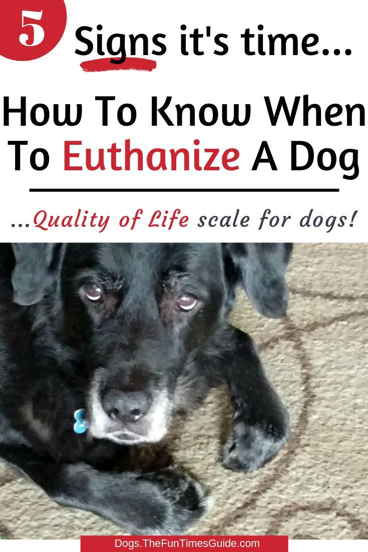 How Do You Know When It S Time To Euthanize Your Dog My Experience Personally And While Working For A Vet In 2020 Dog Death Your Dog Dog Illnesses