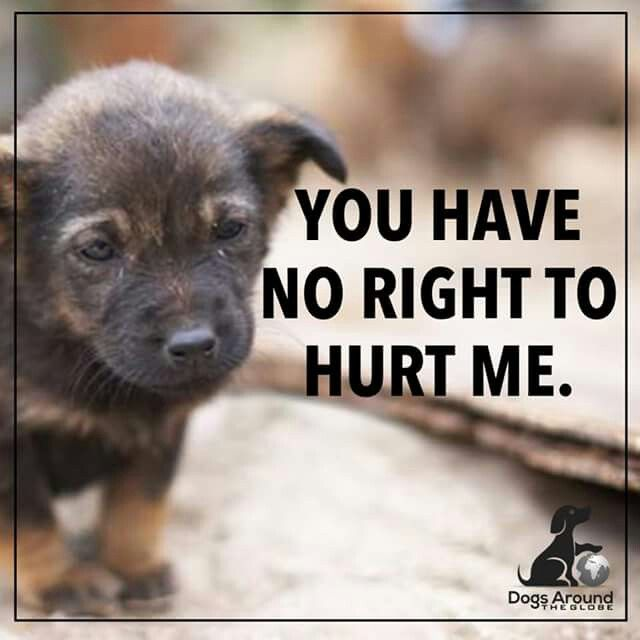 REPORT ANIMAL ABUSE! Call your local police, animal control or humane society - it only takes a minute and can save lives of those who are suffering!!!!!