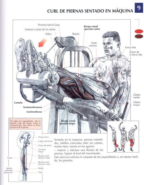 Explicación ejercicios en gym y músculos involucrados