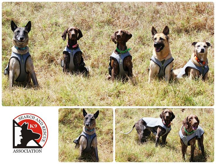 EQDOG Cool Dog cooling vests came in handy at K9 SARA Western Capes, very hot training session! #beyourdogsbestfriend