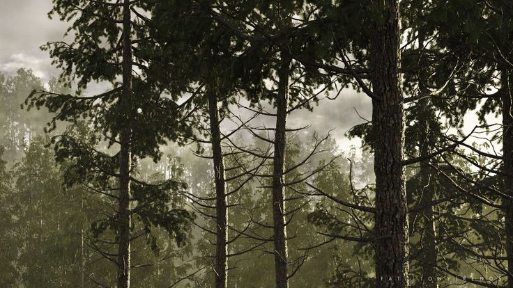 Private Project | Pine Forest Vegetation Visualization