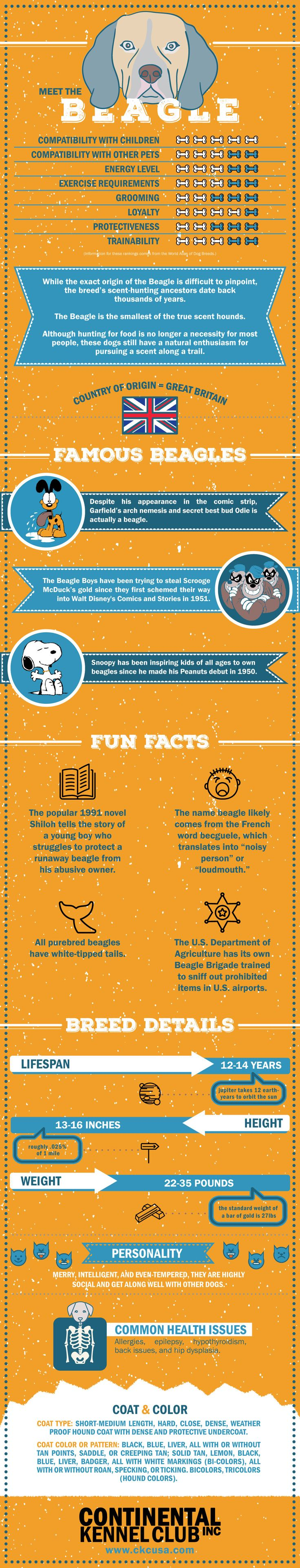Beagle Breed Information Infographic                                                                                                                                                                                 More
