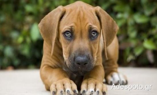 Χαβάη: Κόβουν πρόστιμα στα σκυλιά που γαυγίζουν πάνω από 10 λεπτά!