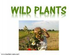 WILD PLANTS FLASHCARDS