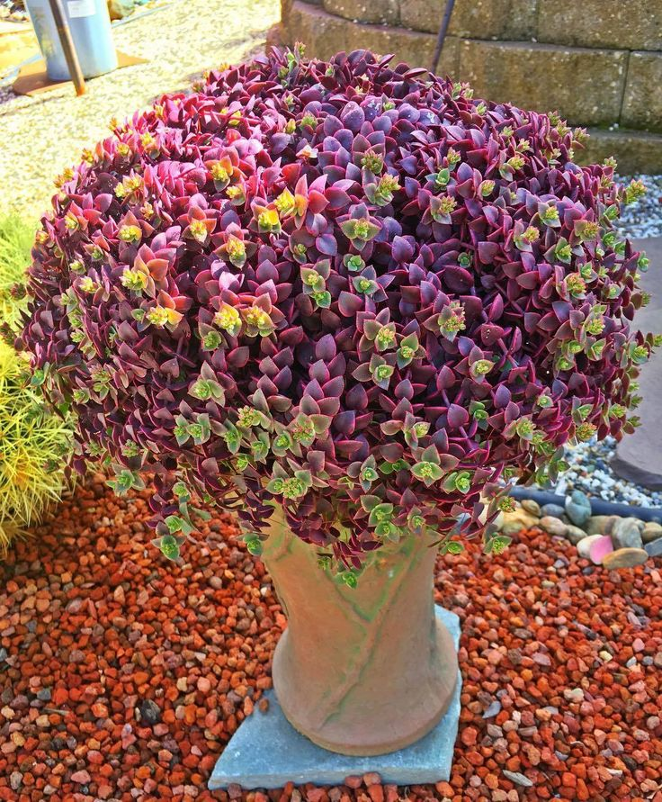60 Beautiful Succulent Ideas For Summer