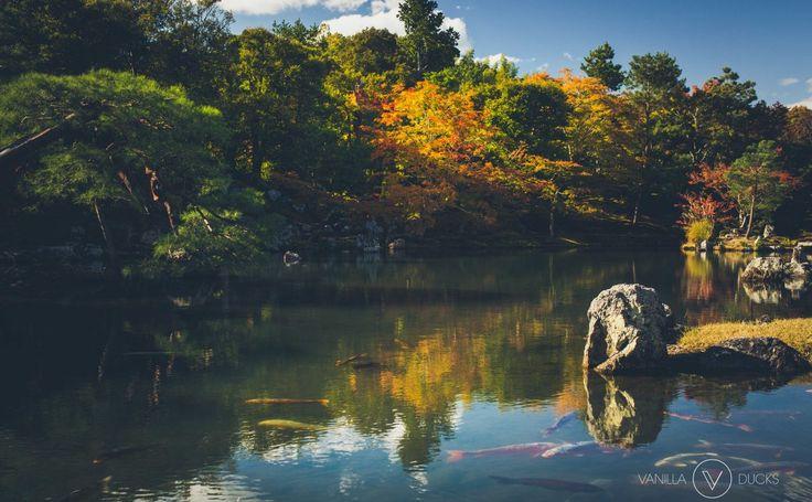 Réflections zen et momiji de l'automne japonais