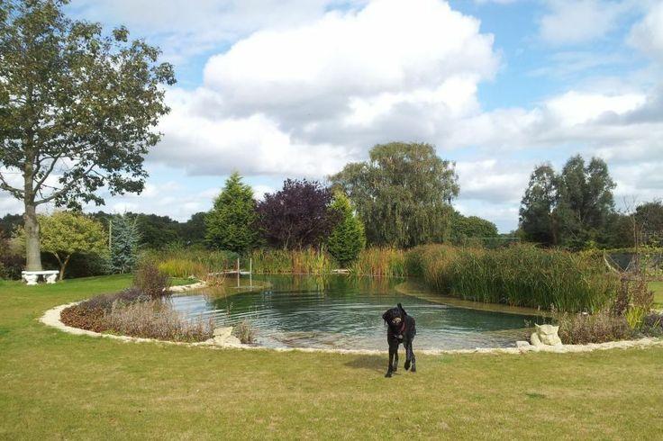 Les 25 meilleures id es de la cat gorie piscine pour chien for Piscine naturelle a debordement