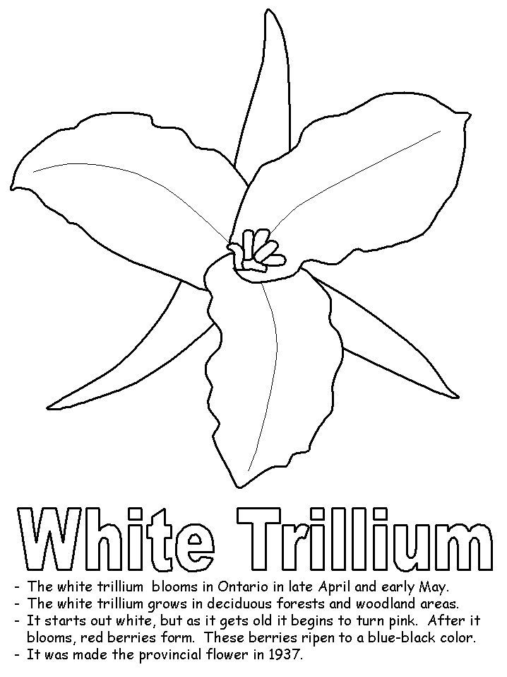 1000 images about cross canada challenge on pinterest for Coloring pages of crosses with flowers