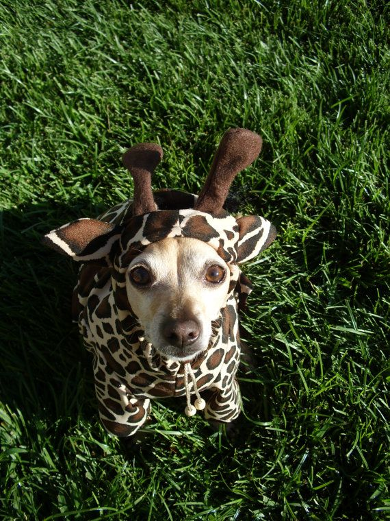 Giraffe Dog Pet Costume ALL SIZES AVAILABLE by GypsyEyesClothing