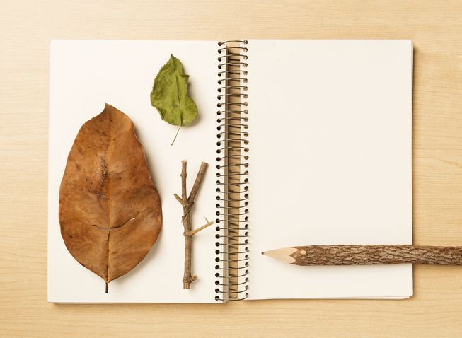 Learn to dive into nature and discover more about the flora and fauna around you by keeping artistic and informative notes.
