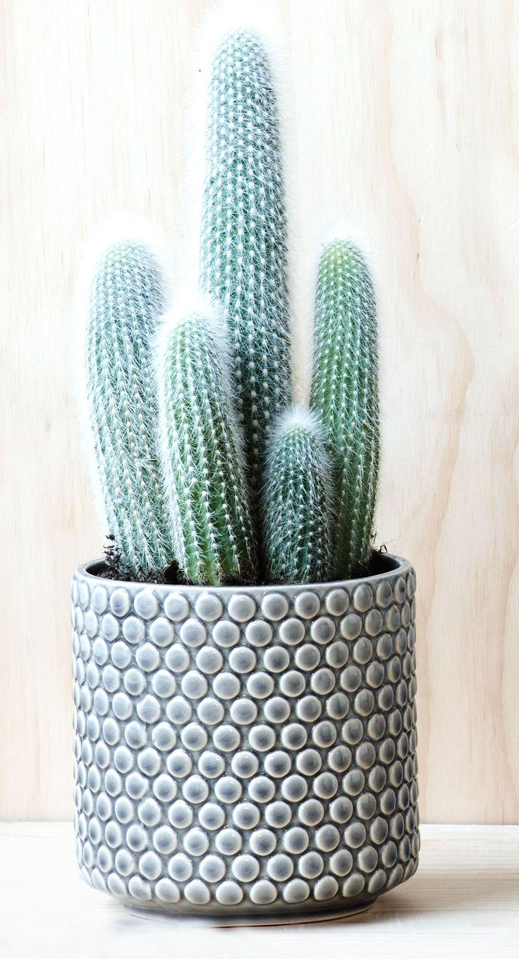 Kaktuser og sukkulenter bliver den helt store trend. Tag dem med i indretningen de er nemme at holde og meget dekorative. #Bloomingville #inspirationdk #NewArrival #NewNature #kaktus #sukkulenter