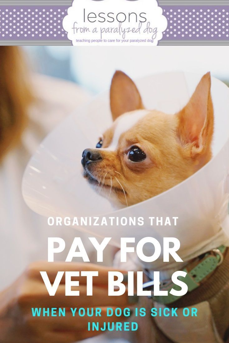 Here S Our Complete List Of Organizations That Help Pay For Veterinary Bills When You Can T Afford It Just Scroll Paralyzed Dog Dog Care Dog Advice