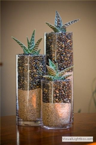 Plant: Partridge Breast Aloe   Light: Partial to bright   Care: Water every 3-4 weeks