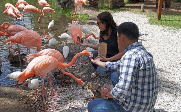 Authentic Florida - Sarasota Jungle Gardens for Charm and Nostalgia