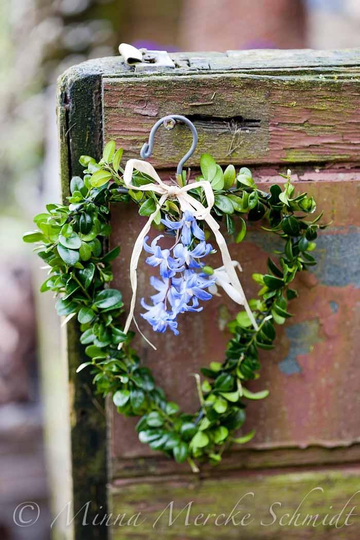 Scilla in spring gardens | floral shop