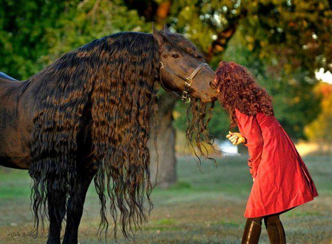 Без сомнения, этого красавца не зря называют самым красивым конем в мире. Его зовут Фридрих Великий, в честь короля Пруссии, который был у власти в XVIII веке. И хотя сам черный жеребец еще не завоевал