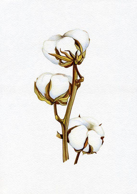 Esta Es Una Foto Profesional De Mi Acuarela Original Titulo Algodon El Tamano Del Papel 210 X 297 Mm 8 3 X 1 Flor De Algodon Dibujo De Flor Flores Pintadas