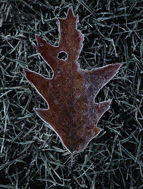 Winter by Carsten Witte, via Behance