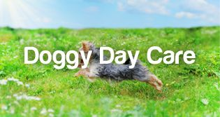 http://www.petstayadvisor.com.au/article/A-short-guide-to-Doggie-Day-Care